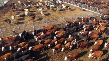 Ege Bölgesi'nde Hayvancılık